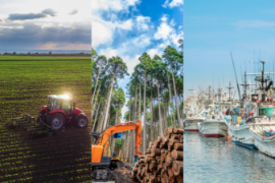 Agriculture, Forestry and Fisheries